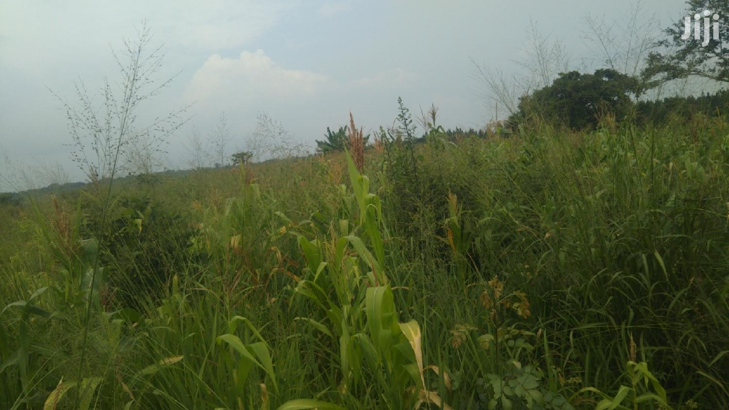 10 Acres of Farmland in Kasana Luwero | Land & Plots For Sale for sale in Luweero, Central Region, Uganda