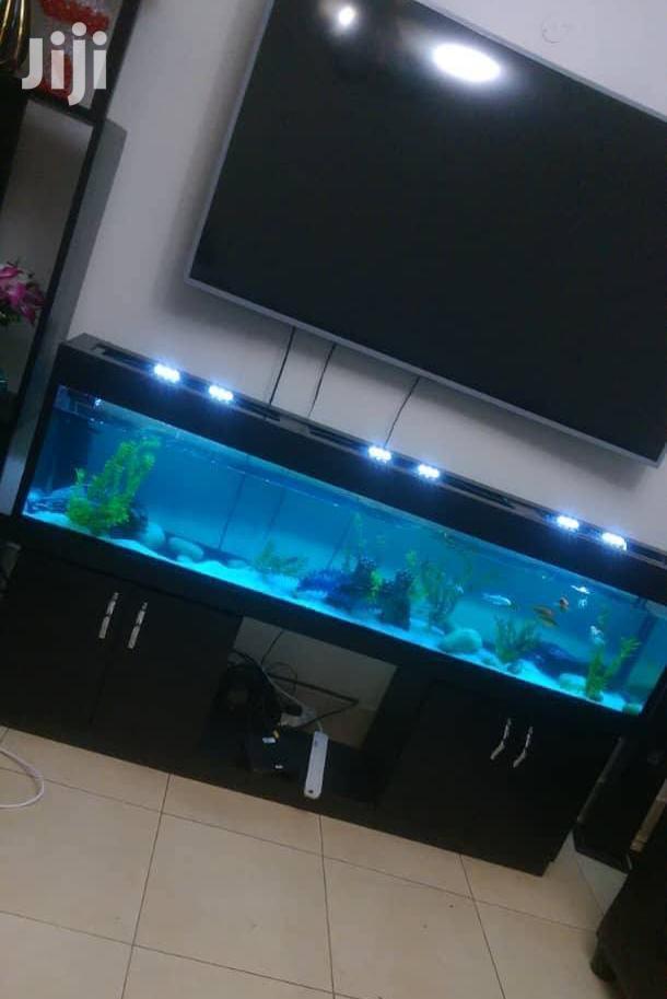 Beautiful Aquariums From Aqua 2000