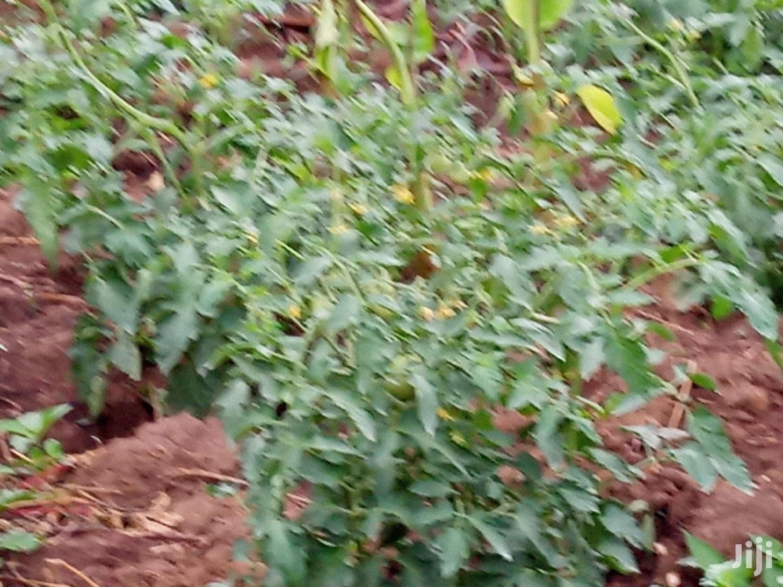 Land for Sale | Land & Plots For Sale for sale in Mubende, Central Region, Uganda