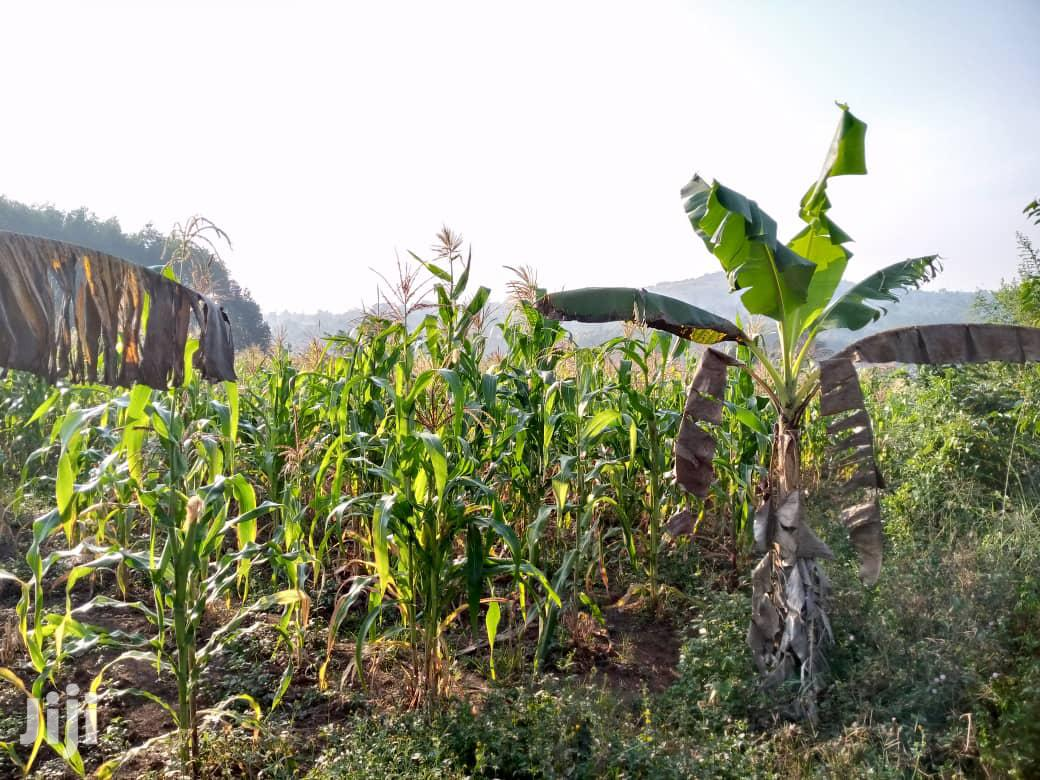 Very Sweet Big Plot With Hse on Quick Sale in Kakiri Town