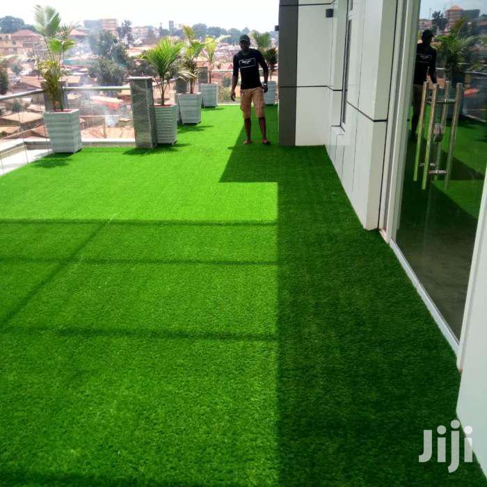 Green Carpet Grass