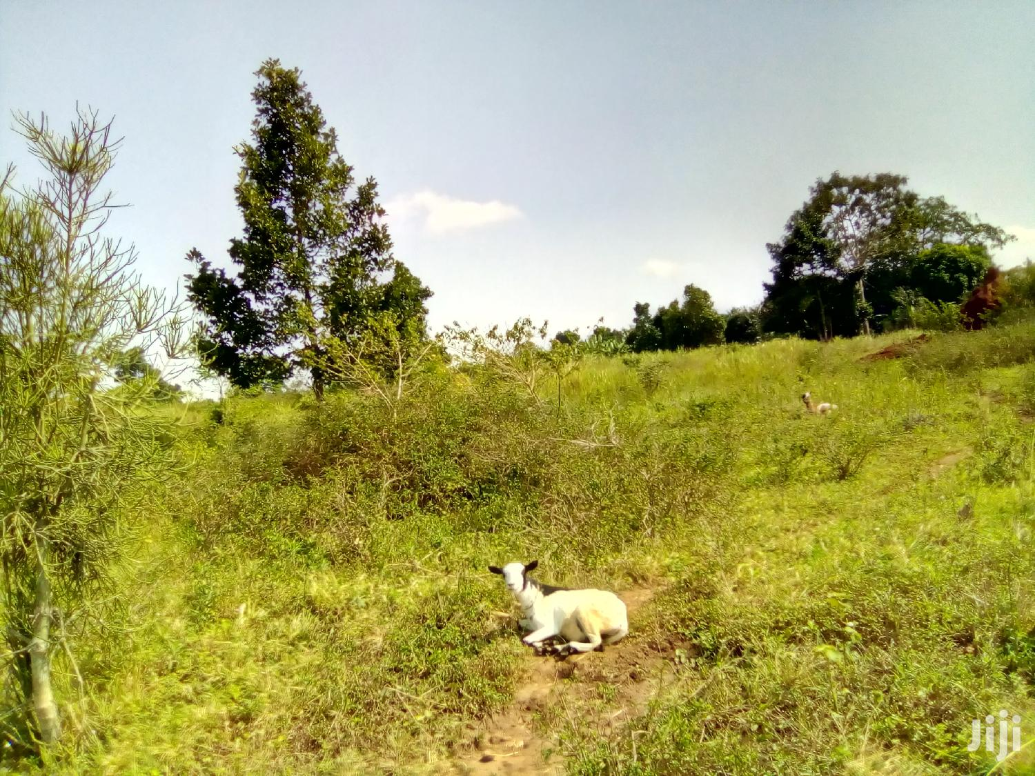 3 Acres Land In Mukono For Sale