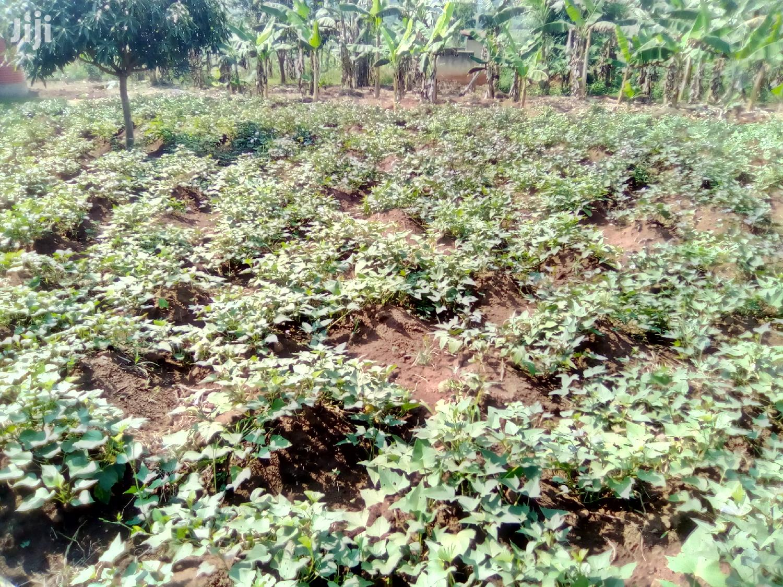 3 Acres Land In Mukono For Sale | Land & Plots For Sale for sale in Kampala, Central Region, Uganda