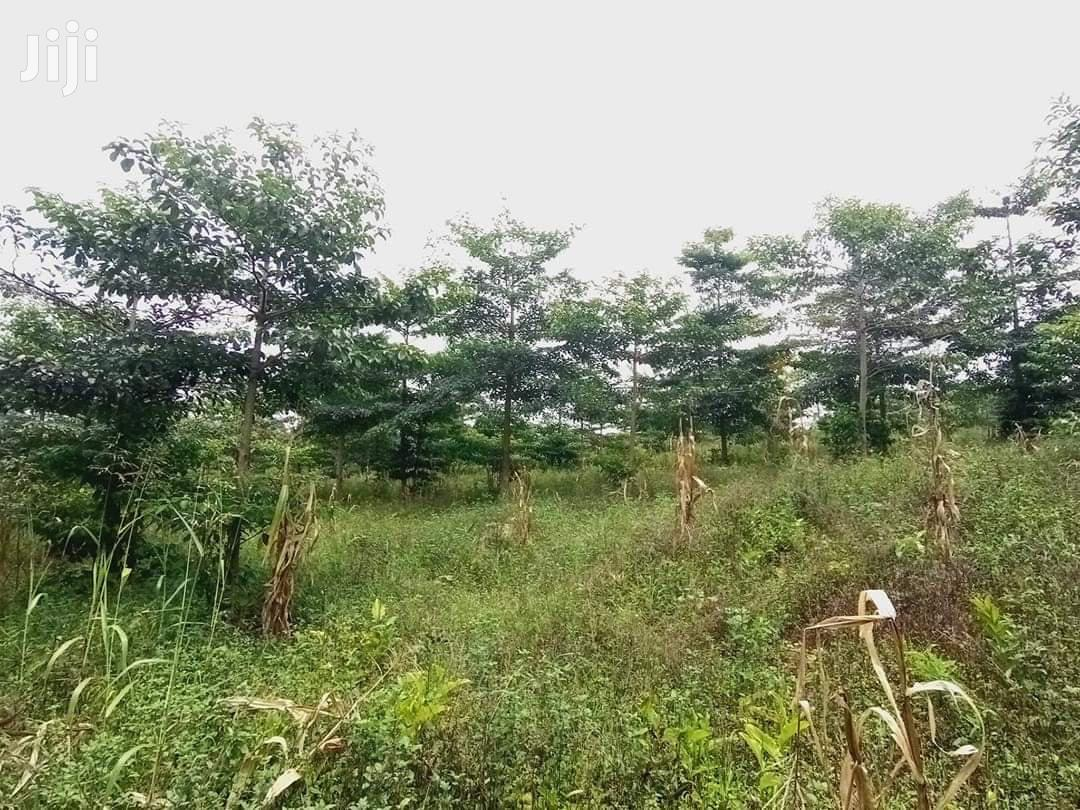 15 Acres Land In Mukono Kabembe For Sale | Land & Plots For Sale for sale in Kampala, Central Region, Uganda