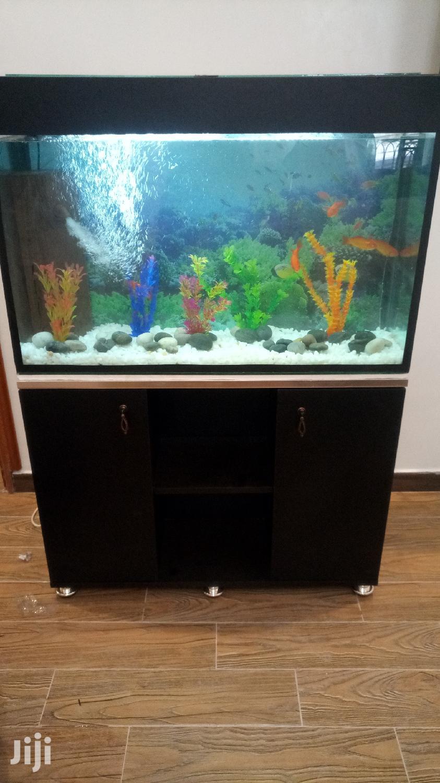 Buy Nice Aquariums From Aqua 2000