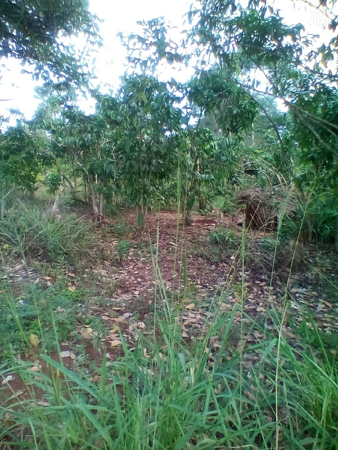 Archive: 1.62 Acres Of Coffee Plantation Land For Sale