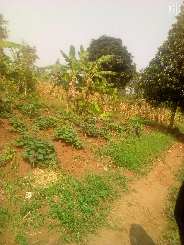 Plots For Sale In Mukono   Land & Plots For Sale for sale in Mukono, Central Region, Uganda