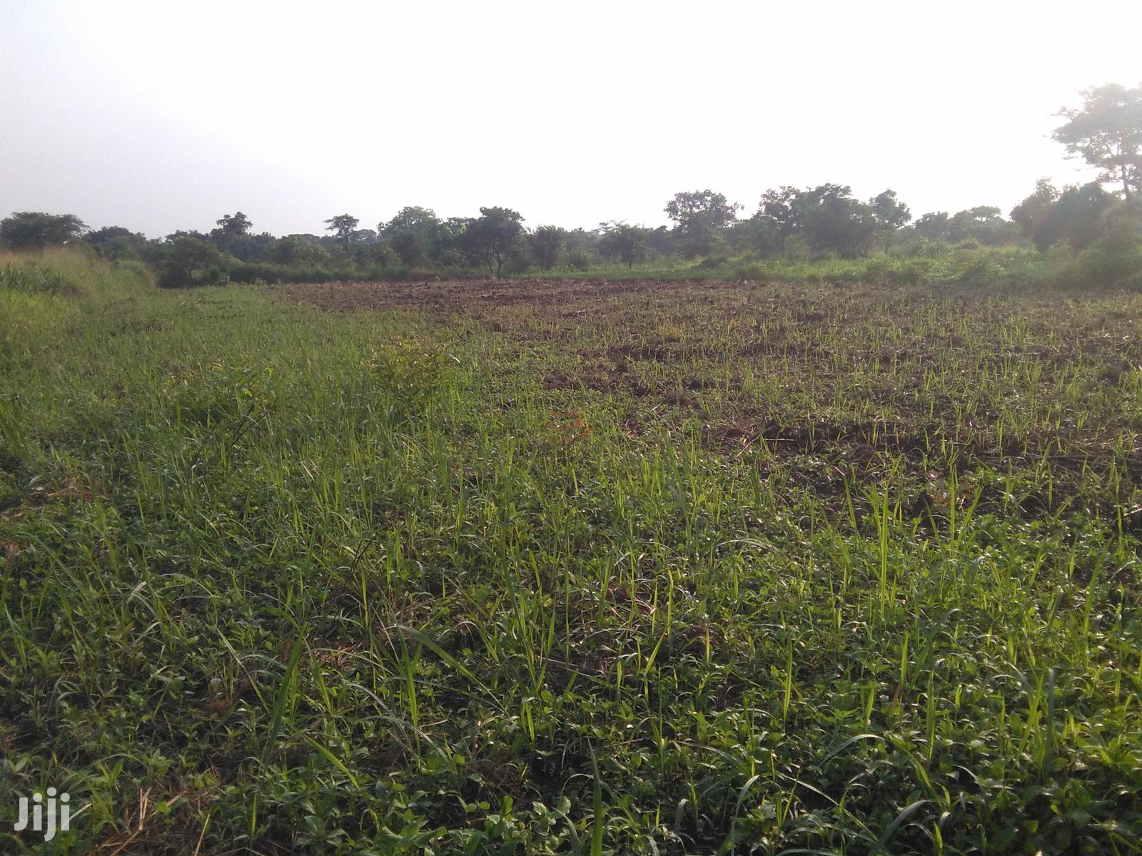 Farm Land And Farm Projects For Sale And Rent