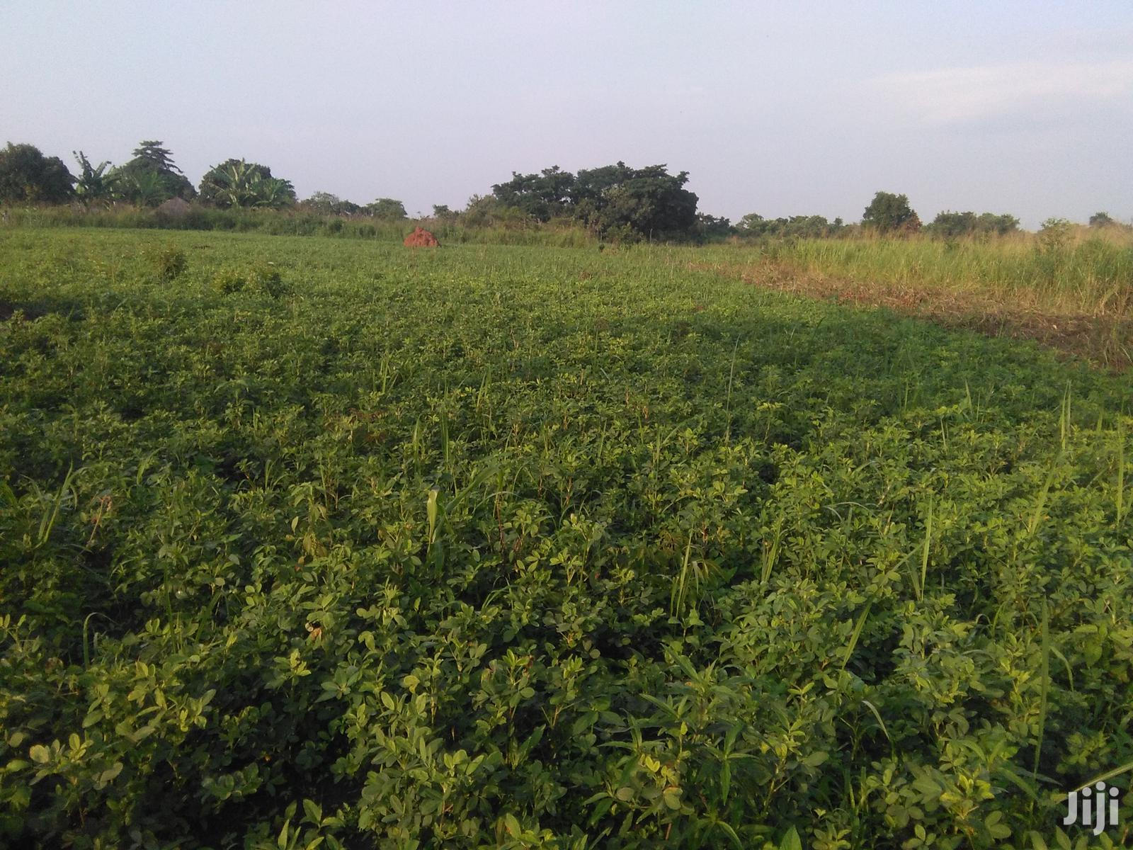 Farm Land And Farm Projects For Sale And Rent | Land & Plots For Sale for sale in Gulu, Nothern Region, Uganda