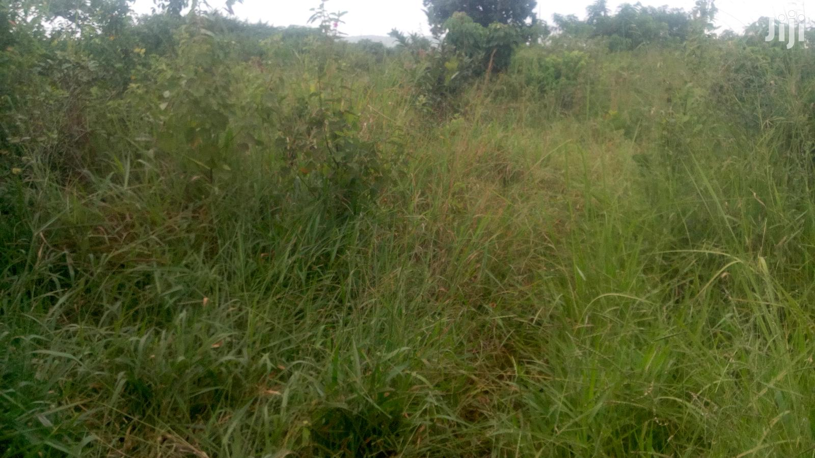 Land For Rent In Luweero