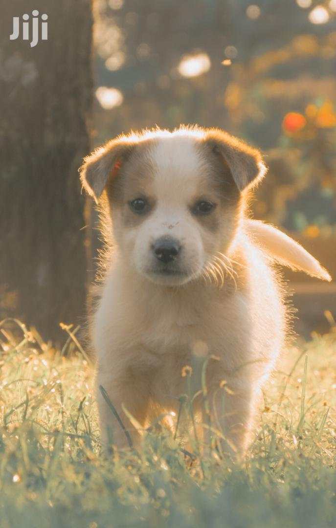 Archive: Baby Female Mixed Breed Mongrel (No Breed)