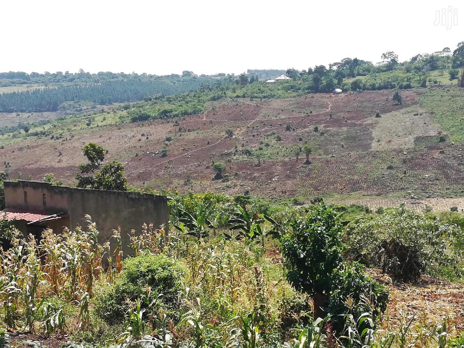 Land For Sale In Kyetume Mityana