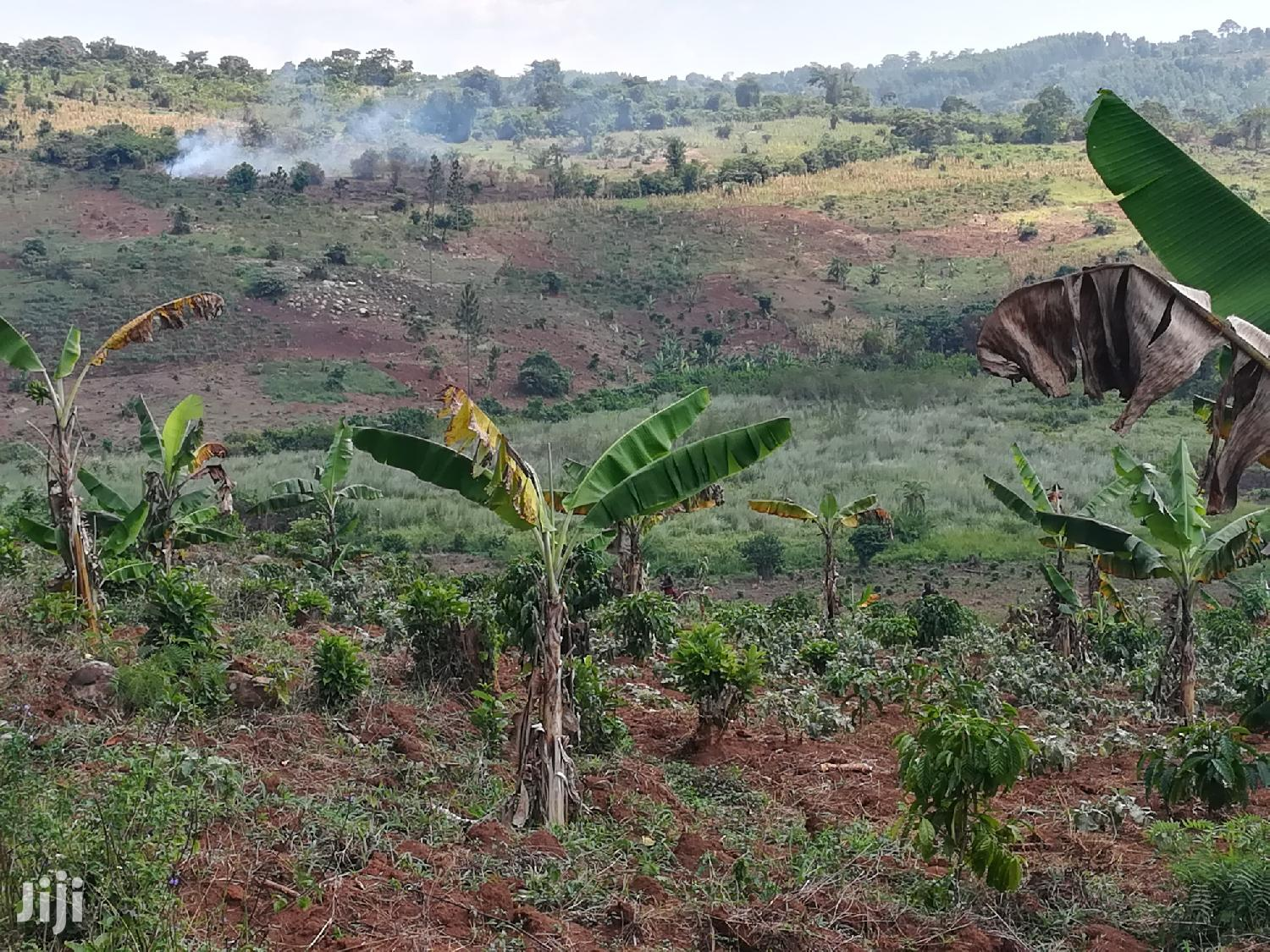 Land For Sale In Kyetume Mityana | Land & Plots For Sale for sale in Wakiso, Central Region, Uganda
