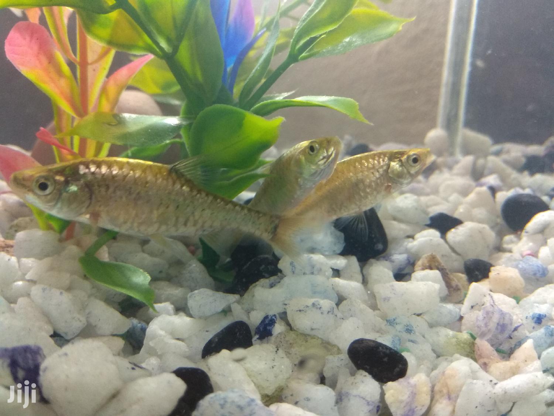Fish For Aquarium