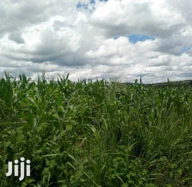 30 Acres Farm Land in Nwoya, Celpeke B for Urgent Sale