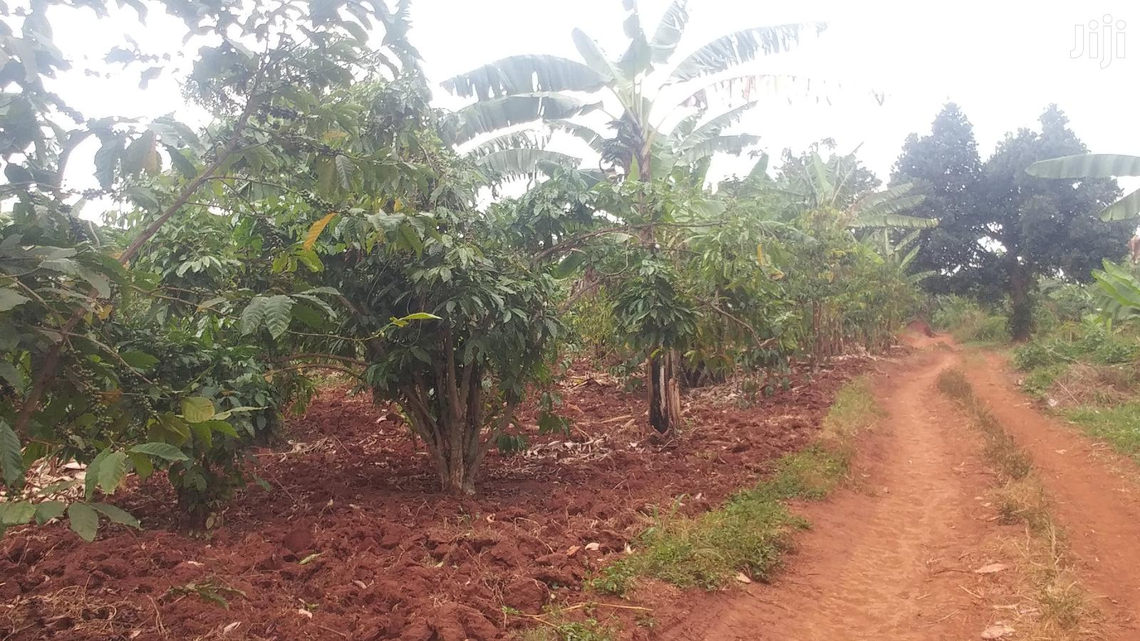 Farmland In Degeya For Sale