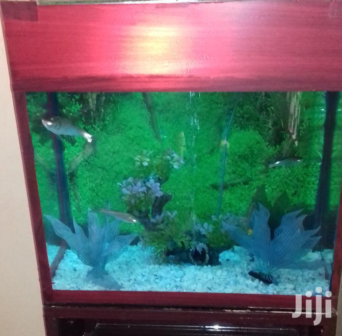 Aquarium In All Sizes