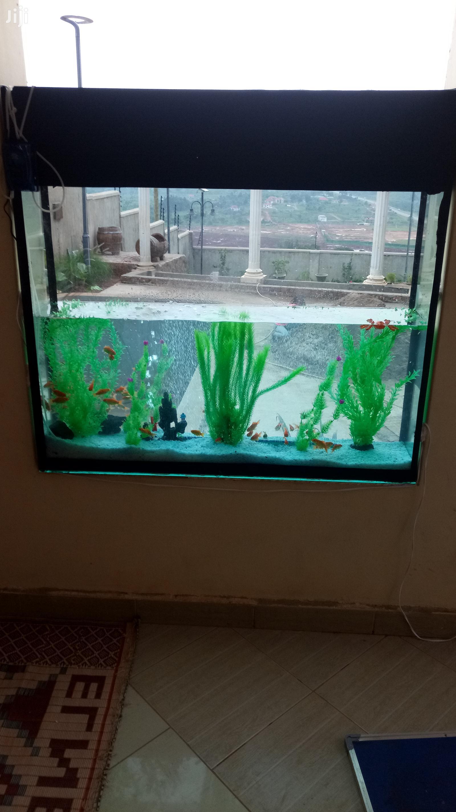 Aquarium at Affordable Rates