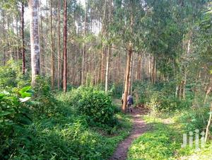 750acres For Sale In Kyegegwa Kakala With Eucalyptus | Land & Plots For Sale for sale in Central Region, Kampala