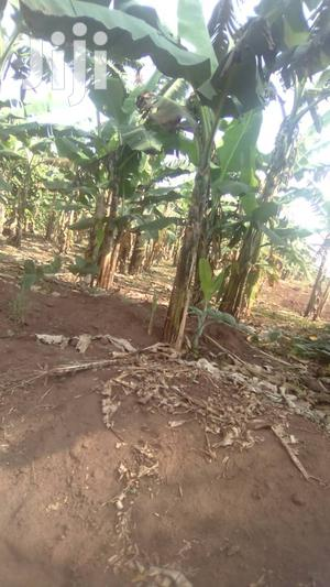 3 Acres in Busiika for Sale | Land & Plots For Sale for sale in Central Region, Kampala