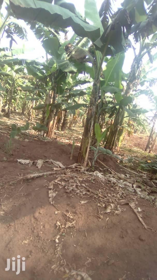 3 Acres in Busiika for Sale