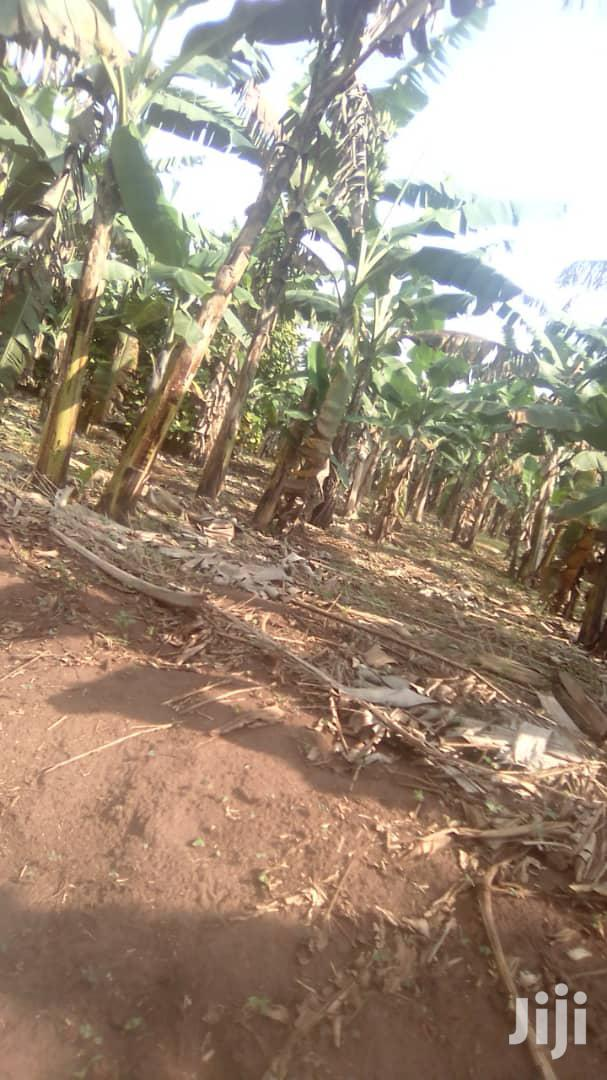 3 Acres in Busiika for Sale | Land & Plots For Sale for sale in Kampala, Central Region, Uganda
