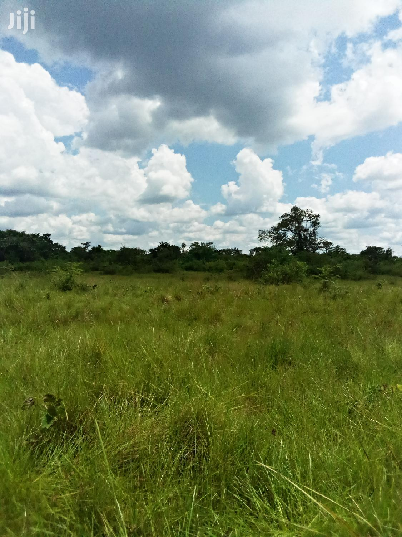 Archive: 6 Square Mile One Acre In Luwero For Sale