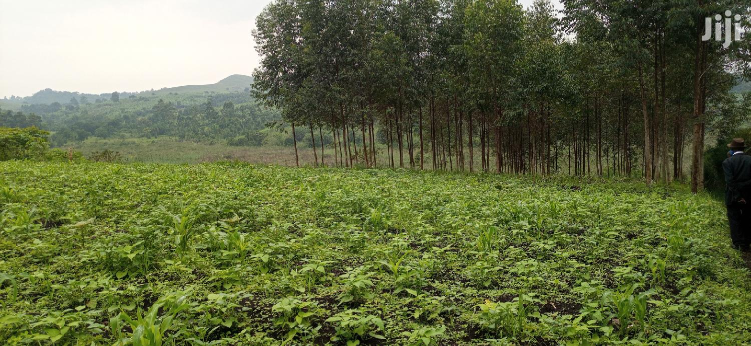 Archive: 7 Acres of Land on Sale