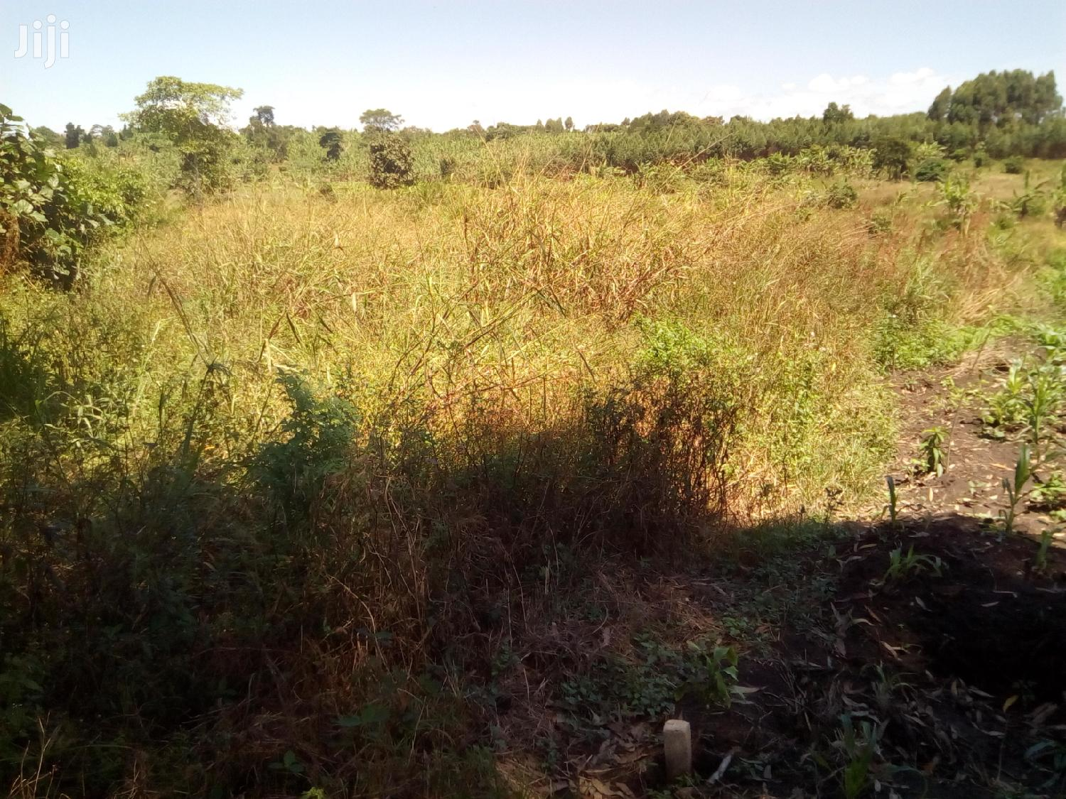 4 Acres Titled Private Mailo Land In Wakiso For Sale | Land & Plots For Sale for sale in Wakiso, Central Region, Uganda