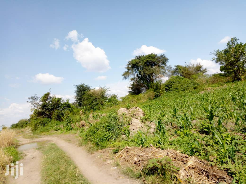 44 Acres Of Farmland For Sale In Kayunga