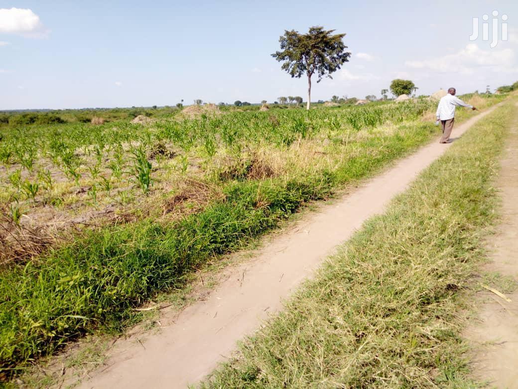 44 Acres Of Farmland For Sale In Kayunga | Land & Plots For Sale for sale in Kampala, Central Region, Uganda