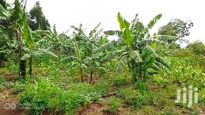 Land For Sale | Land & Plots For Sale for sale in Eastern Region, Iganga