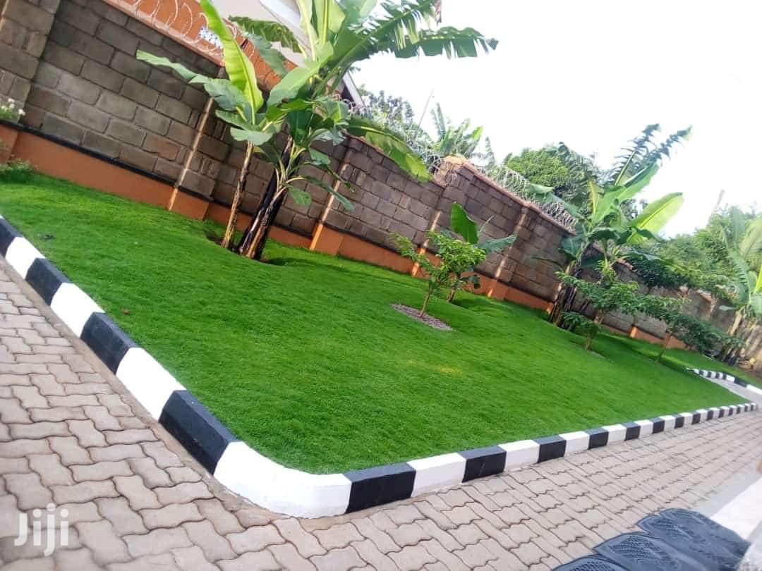 Hybreed Carpet Grass