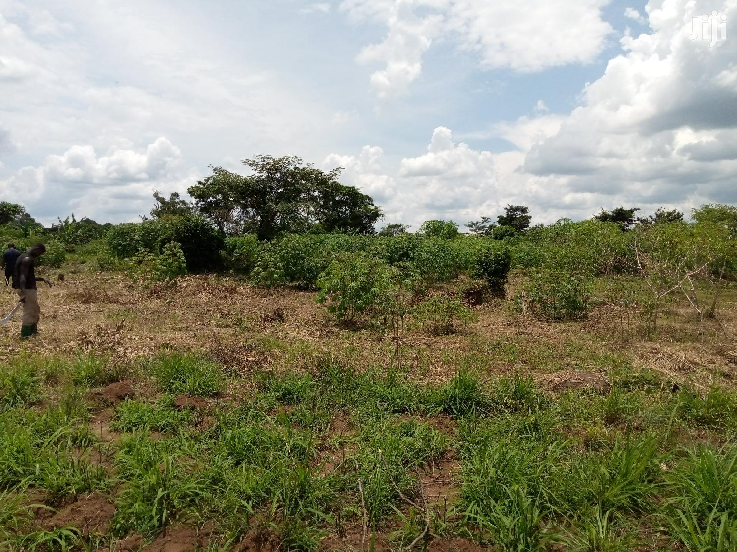 7 Acres Of Land In Kabunyata Luweero For Sale