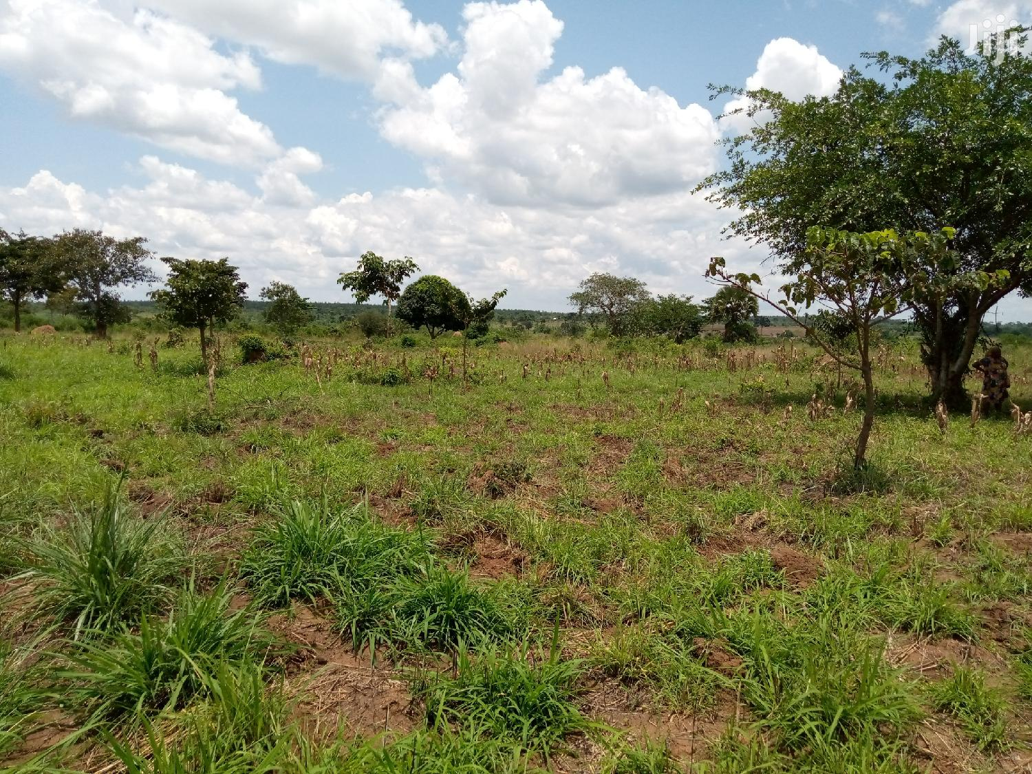 7 Acres Of Land In Kabunyata Luweero For Sale | Land & Plots For Sale for sale in Luweero, Central Region, Uganda