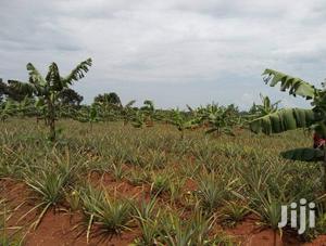 Zirobwe Wabitunguru 15acres For Sale | Land & Plots For Sale for sale in Central Region, Kampala