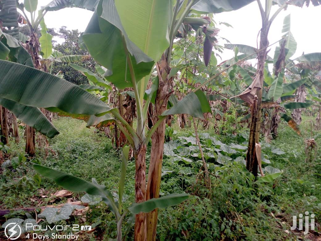Land for Sale in Mukono Nakisunga | Land & Plots For Sale for sale in Mukono, Central Region, Uganda