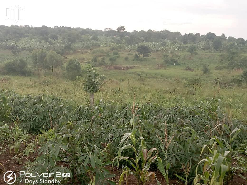 Land For Sale In Mukono Nkokonjeru   Land & Plots For Sale for sale in Mukono, Central Region, Uganda