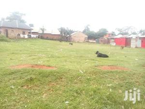50 Decimals, Half Acre Touching Main Nakiwogo Road Opp Market On Sale
