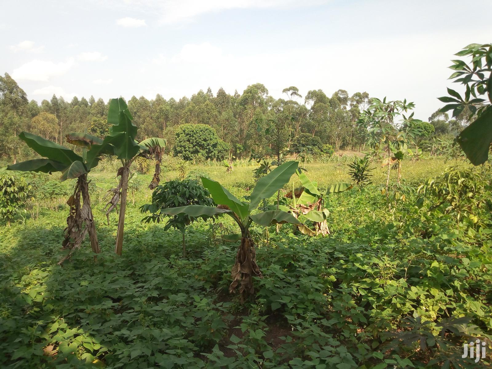 Plots and Large Land at Gobero Hoima Road for KATS DEO SURVEYS LTD | Land & Plots For Sale for sale in Wakiso, Central Region, Uganda