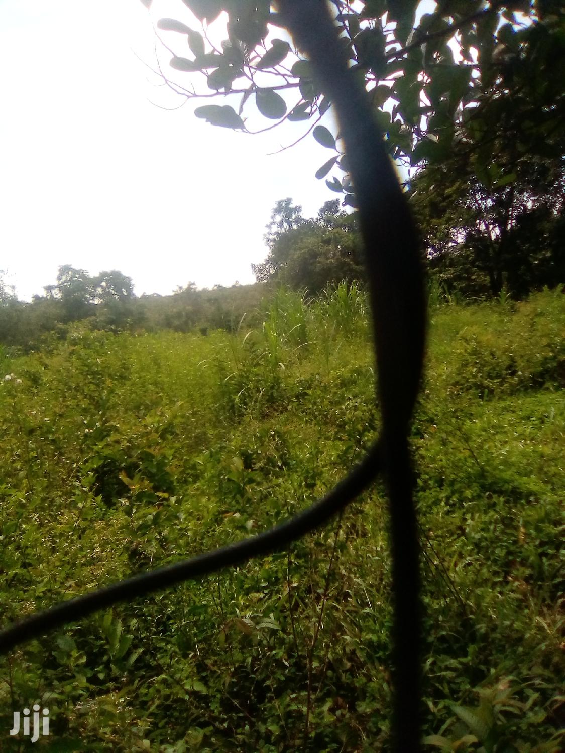 2 Acres Land In Mityana For Sale