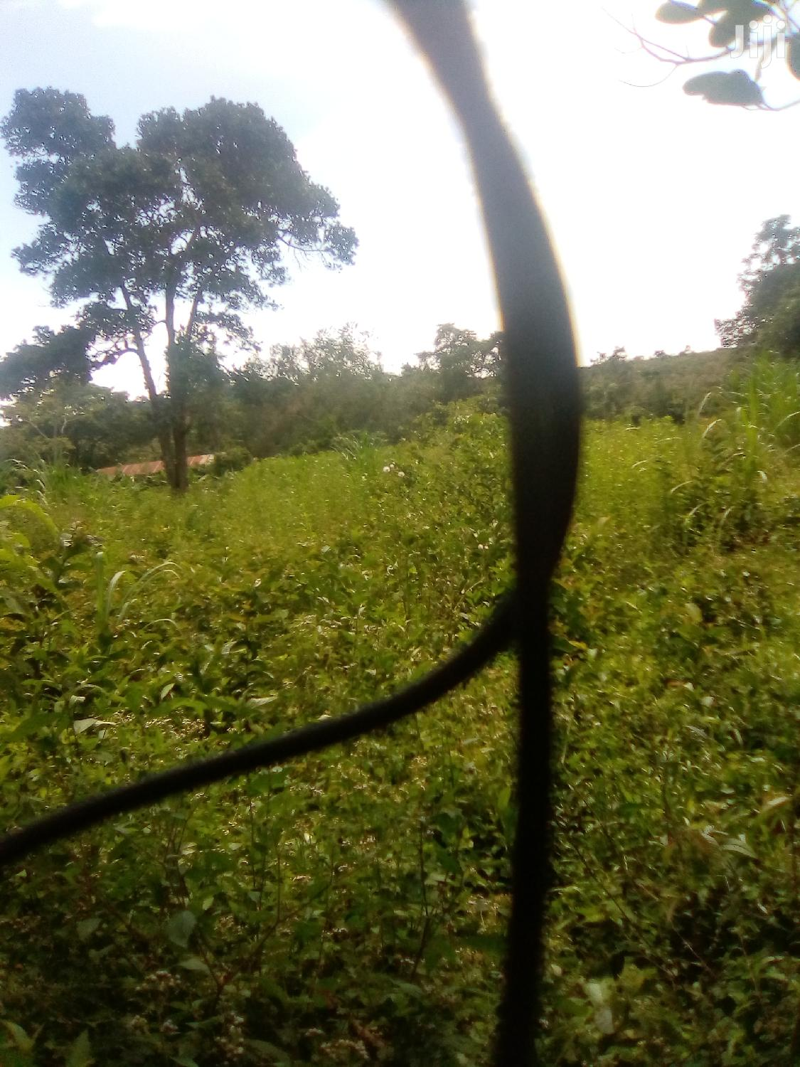 2 Acres Land In Mityana For Sale | Land & Plots For Sale for sale in Luweero, Central Region, Uganda