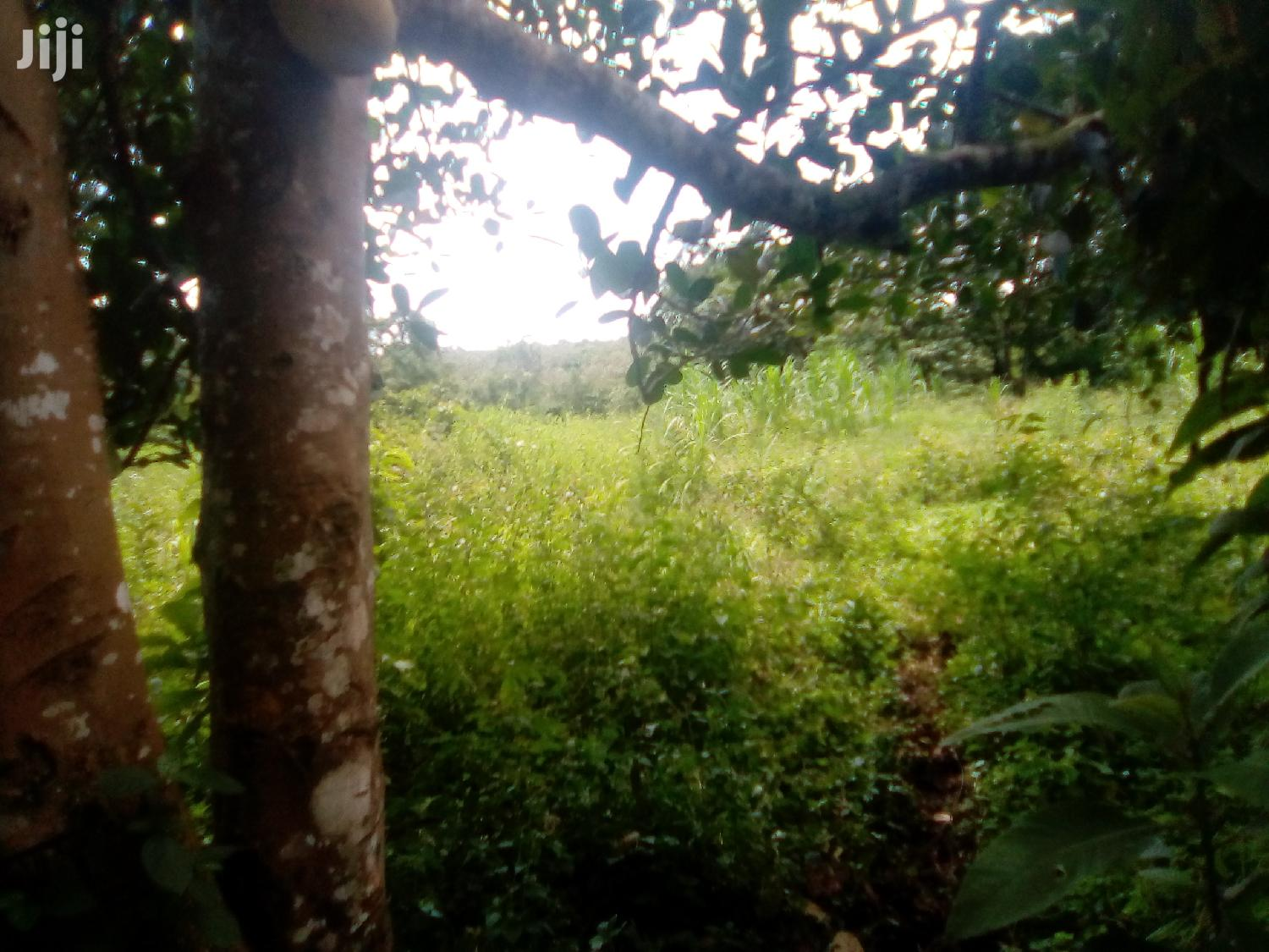 5 Acres Land In Mityana For Sale