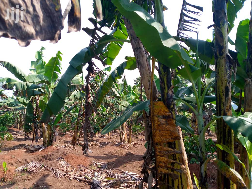 Cheap Land In Mawokota For Sale | Land & Plots For Sale for sale in Mpigi, Central Region, Uganda