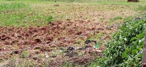 30 Decimals of Land for Sale in Kitukutwe   Land & Plots For Sale for sale in Central Region, Wakiso