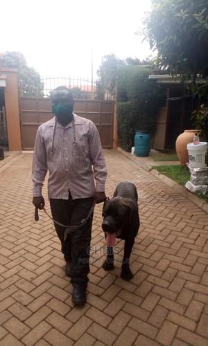 Dog Training Services | Pet Services for sale in Central Region, Kampala