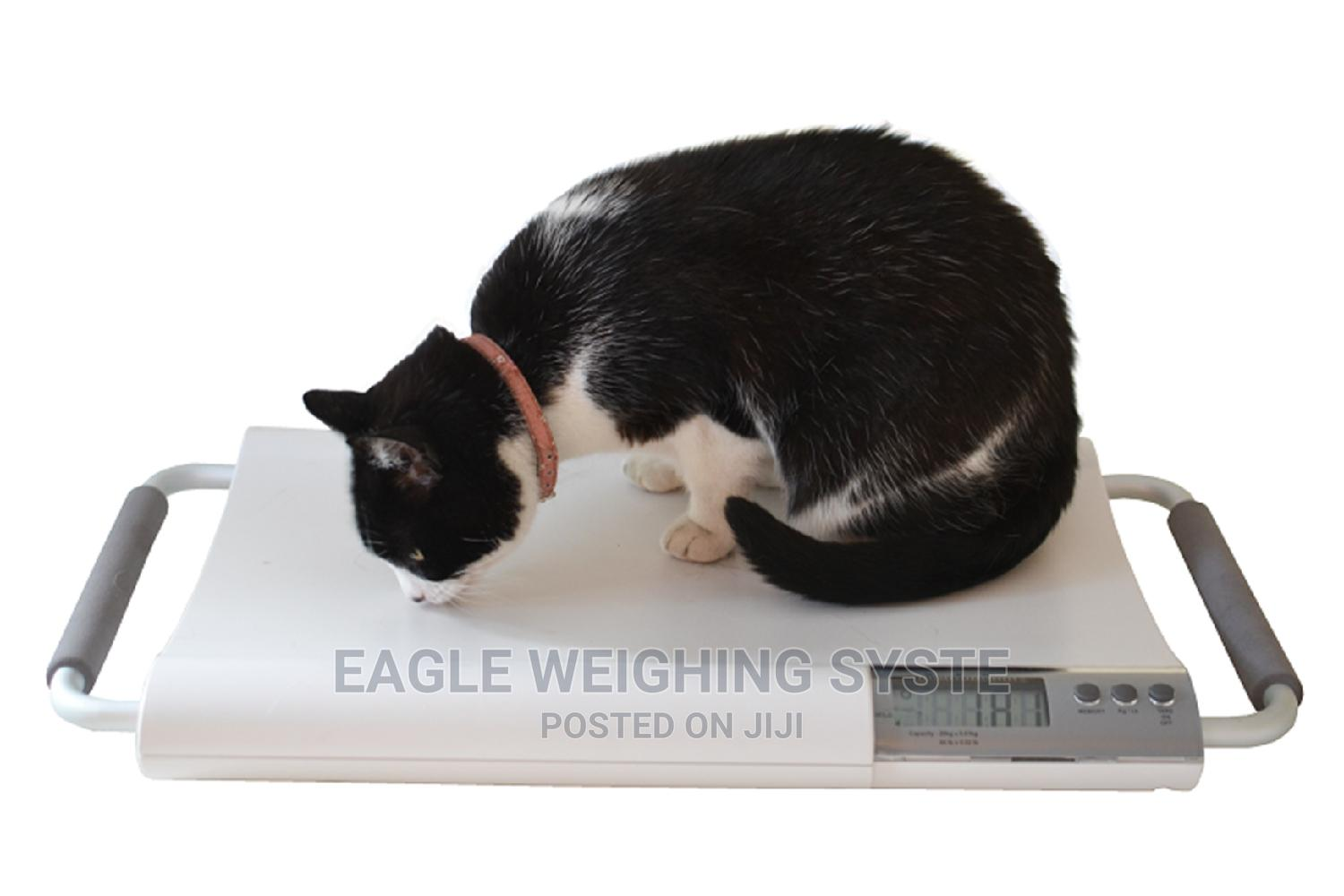 Electronic Farm Cat Weighing Platform Scales Makerere