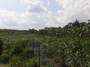 Land for Sale Nakaseke   Land & Plots For Sale for sale in Central Region, Luweero