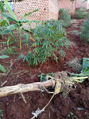 50 by 30ft at Buddo, After Kyengera | Land & Plots for Rent for sale in Central Region, Kampala