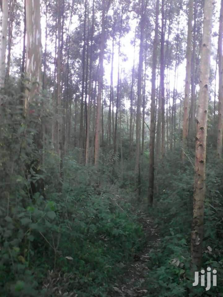 Land At Mityana Mubende Road 65 Acres For Sale